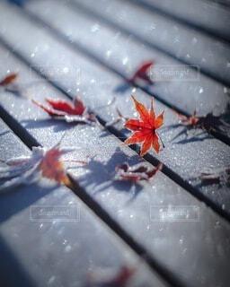 あるよく冷えた朝のの写真・画像素材[3799709]
