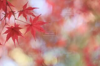 カラフルな紅葉の写真・画像素材[3799716]