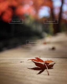 紅葉のシルエットの写真・画像素材[3799717]