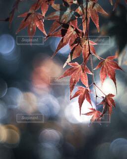 秋の輝きの写真・画像素材[3833175]