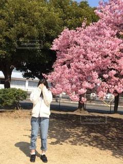 河津桜の前での写真・画像素材[3402771]