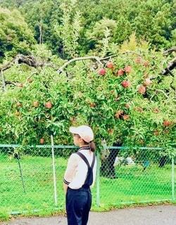 林檎をみつけましたの写真・画像素材[3407554]