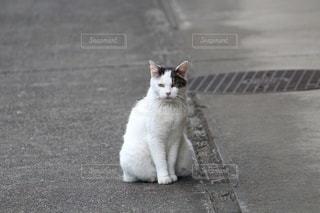 散歩の途中で写真を撮らせてくれたお猫様の写真・画像素材[3359256]