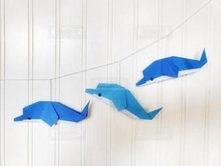 イルカの写真・画像素材[3394600]