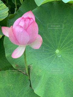 緑の植物のクローズアップの写真・画像素材[3389842]