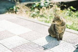 歩道に座っている猫の写真・画像素材[3365647]