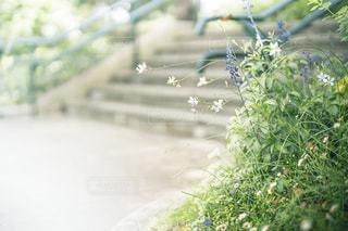 朝の公園にて。の写真・画像素材[3365708]