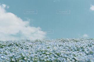 空とネモフィラの写真・画像素材[4340262]