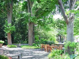 木陰のベンチの写真・画像素材[4445080]