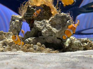 魚のクローズアップの写真・画像素材[3369934]