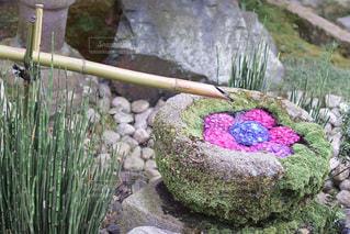 花園のクローズアップの写真・画像素材[3366760]