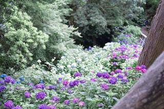 花園のクローズアップの写真・画像素材[3366761]