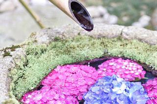 花のクローズアップの写真・画像素材[3366759]