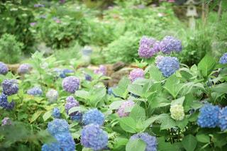 花園のクローズアップの写真・画像素材[3370035]