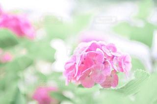 花のクローズアップの写真・画像素材[3370034]