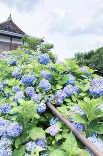 花園のクローズアップの写真・画像素材[3375403]