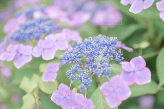 花のクローズアップの写真・画像素材[3375400]