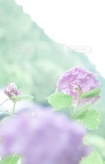 花のクローズアップの写真・画像素材[3375405]