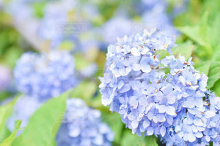 花のクローズアップの写真・画像素材[3375407]
