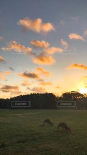 草原に沈む夕日の写真・画像素材[3396051]