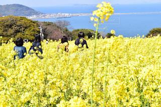 花畑を行進の写真・画像素材[4349988]