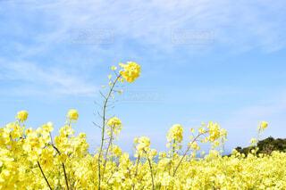 青空と黄色の写真・画像素材[4349987]