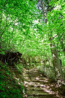 森の中の木々と坂道の写真・画像素材[4417993]