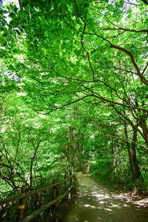 ハイキング途中の緑のトンネルの写真・画像素材[4417992]