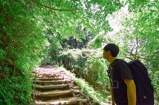 ハイキングの途中と緑の木々の写真・画像素材[4417995]