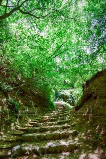 登山の途中の木のトンネルの写真・画像素材[4417997]