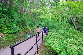 新緑を感じる青紅葉の散歩道の写真・画像素材[4417999]
