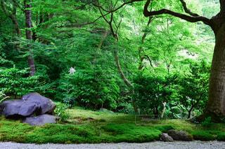 一面の緑と一輪の花の写真・画像素材[4418001]