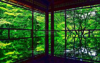 部屋から見える木々と反射の写真・画像素材[4418005]