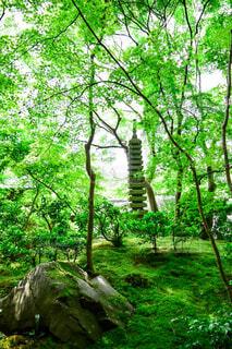 木々の中から見える塔の写真・画像素材[4418033]