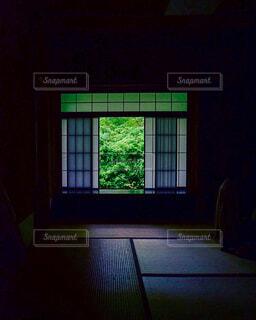 暗い部屋の窓の外の新緑の写真・画像素材[4423310]