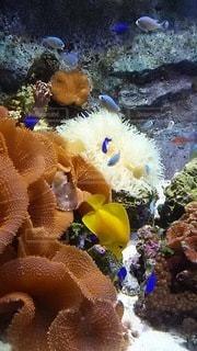 水族館ですの写真・画像素材[3374437]