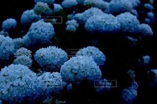 サンゴのクローズアップの写真・画像素材[3374686]