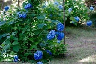 花園のクローズアップの写真・画像素材[3374689]