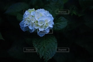 花のクローズアップの写真・画像素材[3374690]