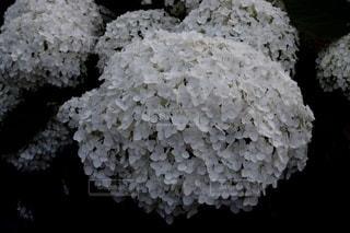 花のクローズアップの写真・画像素材[3374691]