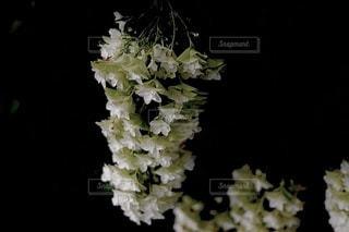 花のクローズアップの写真・画像素材[3386236]