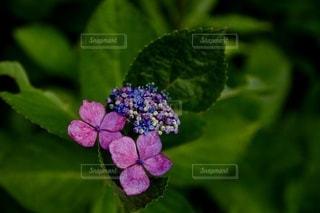 花のクローズアップの写真・画像素材[3386238]