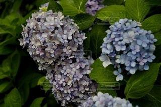 花のクローズアップの写真・画像素材[3386237]