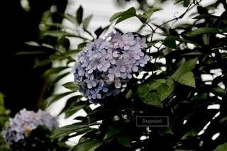 花のクローズアップの写真・画像素材[3386239]
