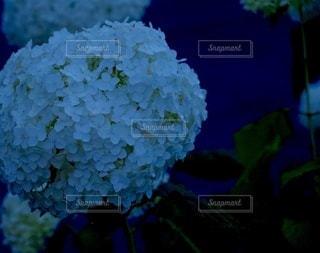 花のクローズアップの写真・画像素材[3387542]