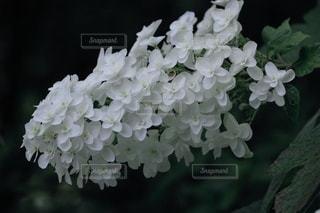 花のクローズアップの写真・画像素材[3387683]