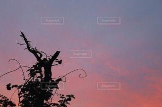 木の上を飛ぶ鳥の群れの写真・画像素材[3397961]