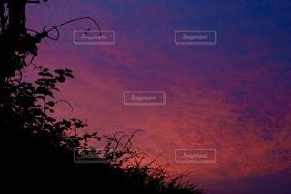 背景に夕日のある木の写真・画像素材[3397963]
