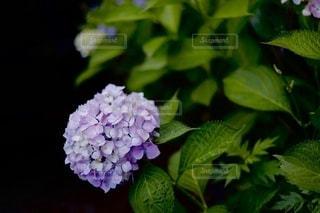 花のクローズアップの写真・画像素材[3404891]