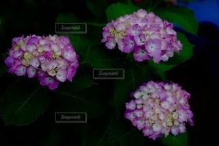 花のクローズアップの写真・画像素材[3404892]